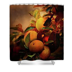 Fall Apples A Living Still Life Shower Curtain