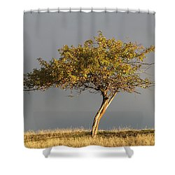 Fall At The Crabapple Tree Shower Curtain