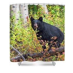 Fall Bear Shower Curtain