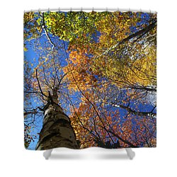 Fall Canopy Patterns 6 Shower Curtain