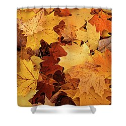 Fall Carpet 10 Shower Curtain by Mary Bedy
