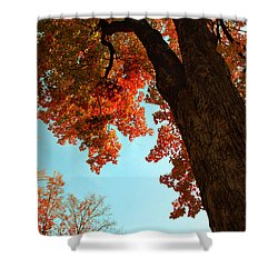 Fall Color 2010 No 3 Shower Curtain