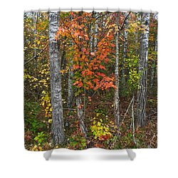 Fall Color At Gladwin 4543 Shower Curtain