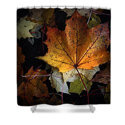 Fall Color Series II Shower Curtain