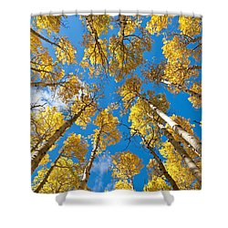 Fall Colored Aspens In The Inner Basin Shower Curtain