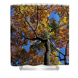 Shower Curtain featuring the photograph Fall Colorful Trees by Haleh Mahbod