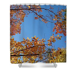 Fall Colors In Hoyt Arboretum Shower Curtain