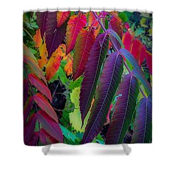 Shower Curtain featuring the photograph Fall Feathers by Kendall McKernon