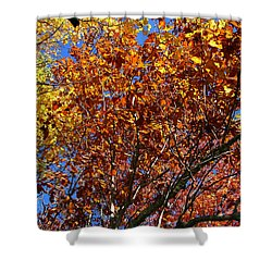 Fall Shower Curtain by Flavia Westerwelle