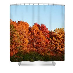 Shower Curtain featuring the photograph Fall Forest by Nikki McInnes