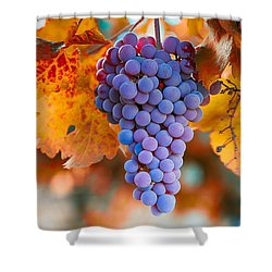 Fall Grapes From The Yakima Valley,  Shower Curtain by Lynn Hopwood