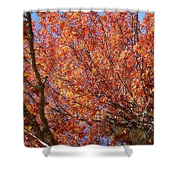 Fall In The Blue Ridge Mountains Shower Curtain by Flavia Westerwelle