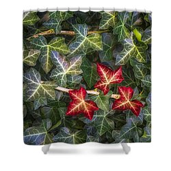 Shower Curtain featuring the photograph Fall Ivy Leaves by Adam Romanowicz