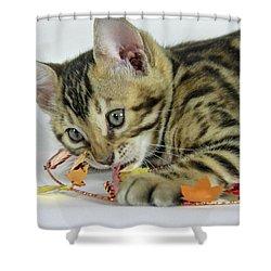 Fall Kitten Shower Curtain by Shoal Hollingsworth