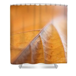 Shower Curtain featuring the photograph Fall Leaf by Elena Nosyreva