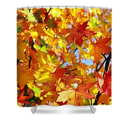 Fall Leaves Background Shower Curtain by Carlos Caetano