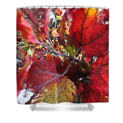 Fall Leaves Design 1 Shower Curtain