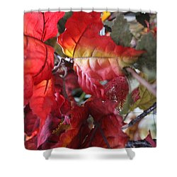 Fall Leaves Design 4 Shower Curtain