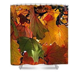 Fall Leaves Shower Curtain by Mikki Cucuzzo