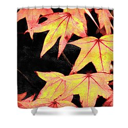 Fall Leaves Shower Curtain by Robert Ball