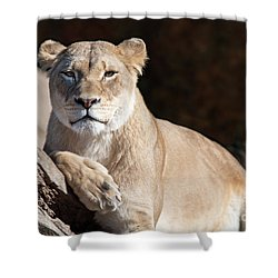 Fall Lioness Shower Curtain