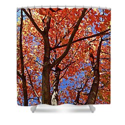 Fall Maple Shower Curtain