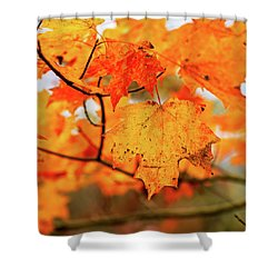 Fall Maple Leaf Shower Curtain
