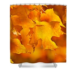 Fall Maple Leaves Shower Curtain by Elena Elisseeva