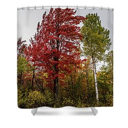 Shower Curtain featuring the photograph Fall Maple by Paul Freidlund