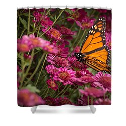 Shower Curtain featuring the photograph Fall Monarch  by Julie Andel