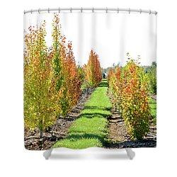 Fall On The Tree Farm Shower Curtain