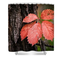 Fall Red Shower Curtain by Juli Ellen