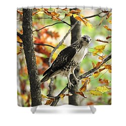 Fall Red-tailed Hawk Shower Curtain