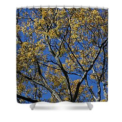 Fall Splendor And Glory Shower Curtain by Deborah  Crew-Johnson