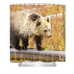 Fall Travels  Shower Curtain