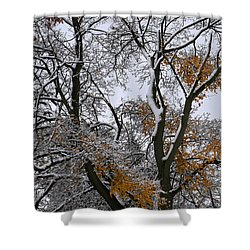 Fall Tree With Snow 1 Shower Curtain
