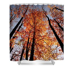 Shower Curtain featuring the photograph Fall Trees Sky by Meta Gatschenberger