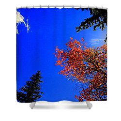 Shower Curtain featuring the photograph Fall Up by Karen Shackles