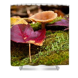 Fallen Leaves And Mushrooms Shower Curtain