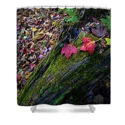 Shower Curtain featuring the photograph Fallen Leaves On The Limberlost Trail by Lori Coleman