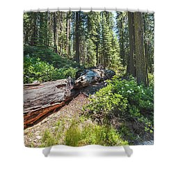 Fallen Tree- Shower Curtain
