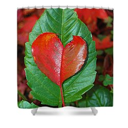 Fall's Vibrant Contrast Shower Curtain