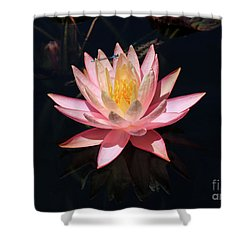 Familiar Bluet Damselfly And Lotus  Shower Curtain