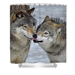 Shower Curtain featuring the photograph Familiar by Tony Beck
