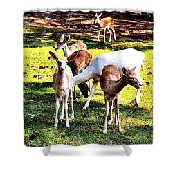 Family Of Deer Shower Curtain