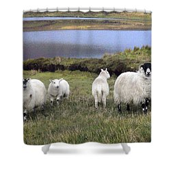 Family Of Sheep Shower Curtain