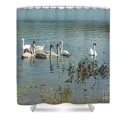 Family Of Swans Shower Curtain