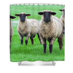 Family Photo Shower Curtain