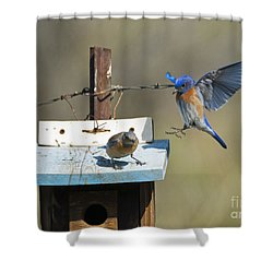 Family Time Shower Curtain by Mike Dawson