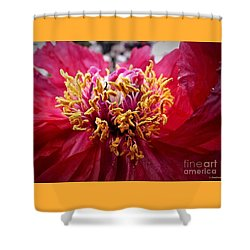Fancy  Shower Curtain by Christy Ricafrente